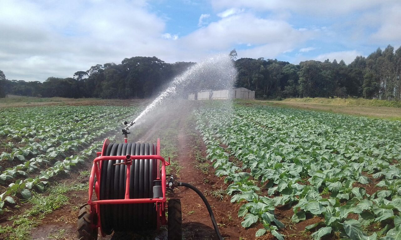 Irrigação: colheita da melancia