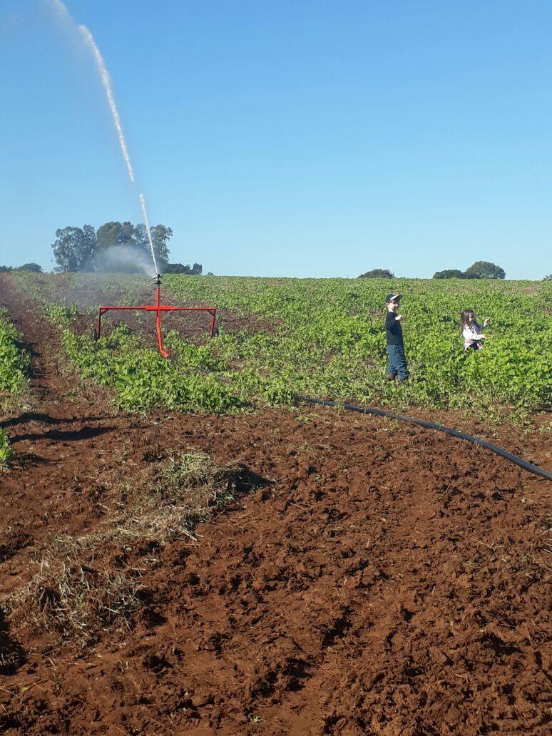 O que você deve avaliar na hora de comprar uma irrigação