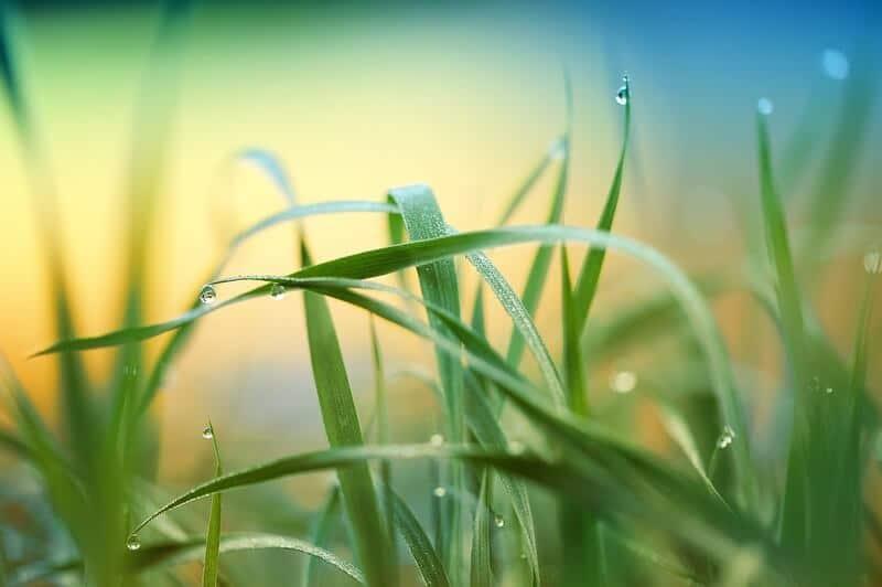 Folhas de planta com gotículas de água