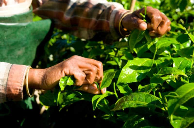Adubação foliar na palntação