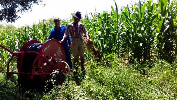 Dois agricultores usando Irrigat em plantação de milho