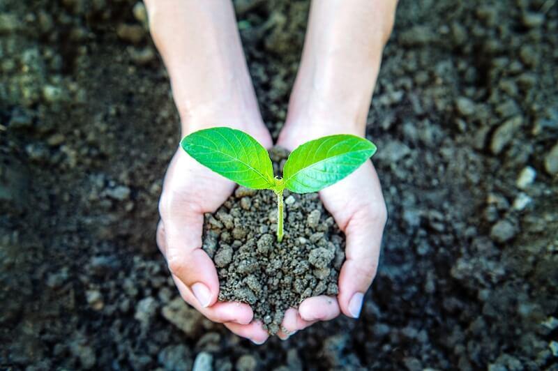 Você conhece a agricultura sustentável? Acesse o conteúdo