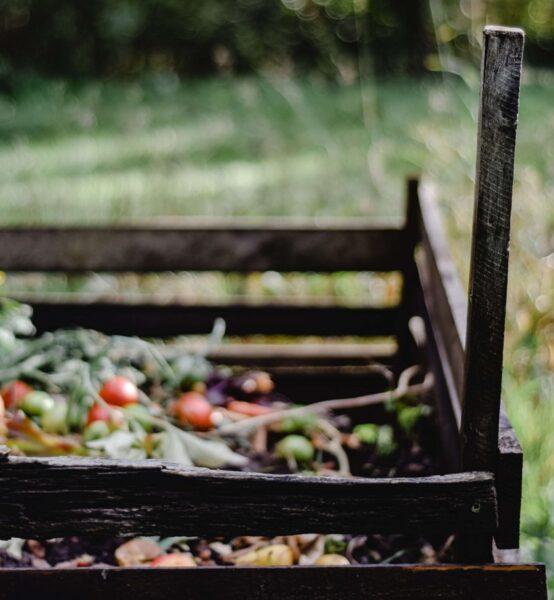 Descubra todo o necessário para realizar o processo de compostagem