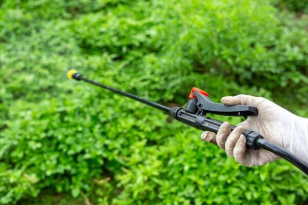 Conheça os mitos e verdades sobre defensivos agrícolas