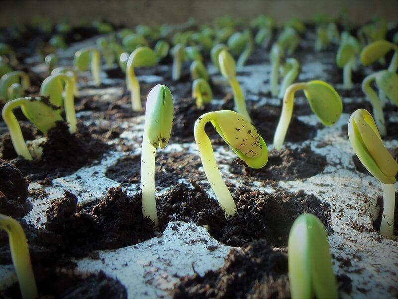 conheça as melhores dicas para plantar soja