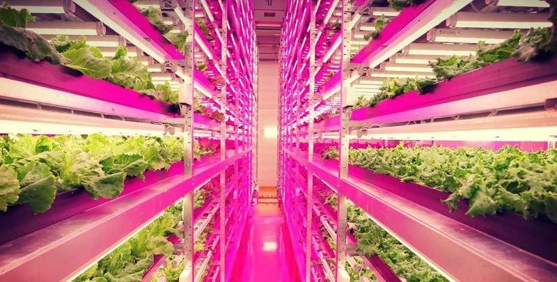 Fazenda indoor