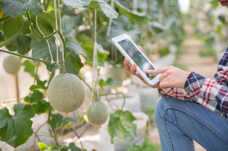 Fazendeiro usando tecnologia para lidar com o campo