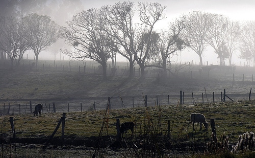 Mês de julho é o mais seco dos últimos 27 anos e prejudica a vida no campo