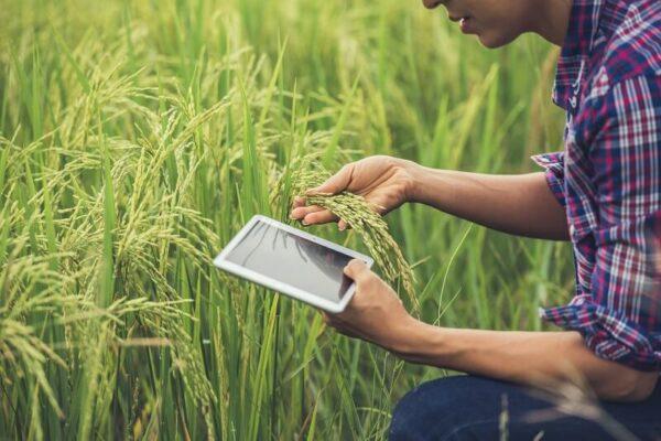 Saiba toda a importância de usar insumos na agricultura