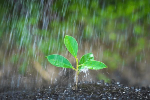 Irrigação com água da chuva