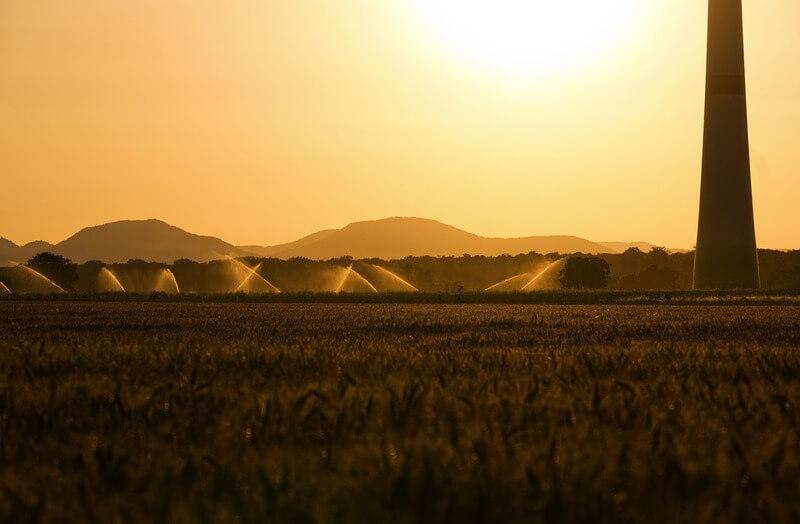 Plantação de feijão sendo irrigada
