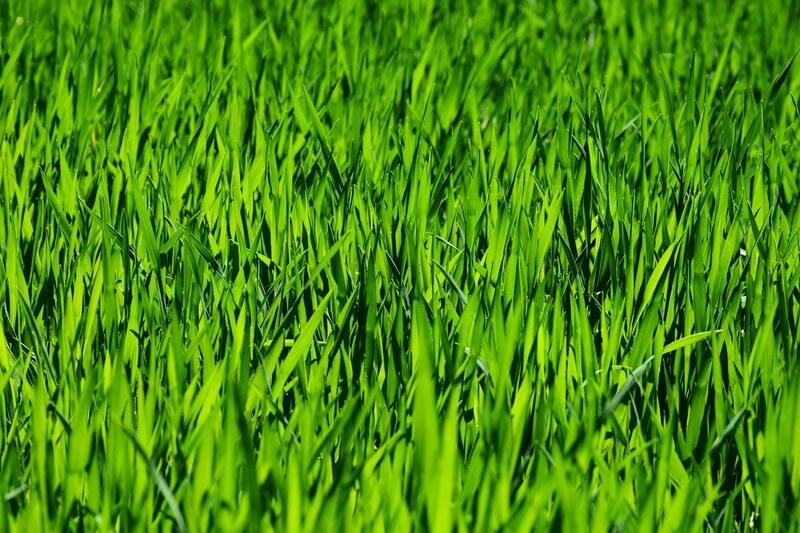 Irrigação de Pasto