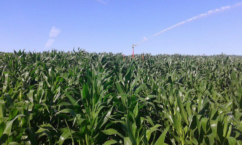 Irrigação em plantação de milho