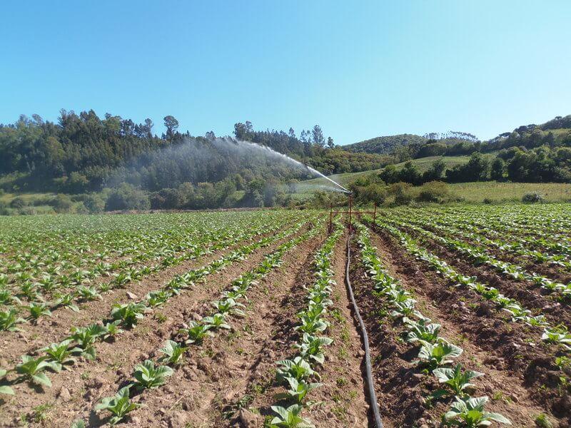 Irrigação de plantação de fumo