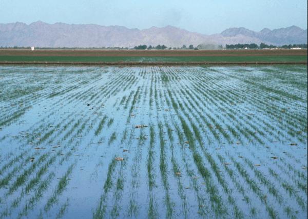 Irrigação superficial
