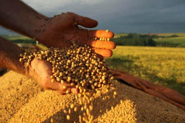 Mãos despejando soja em plantação