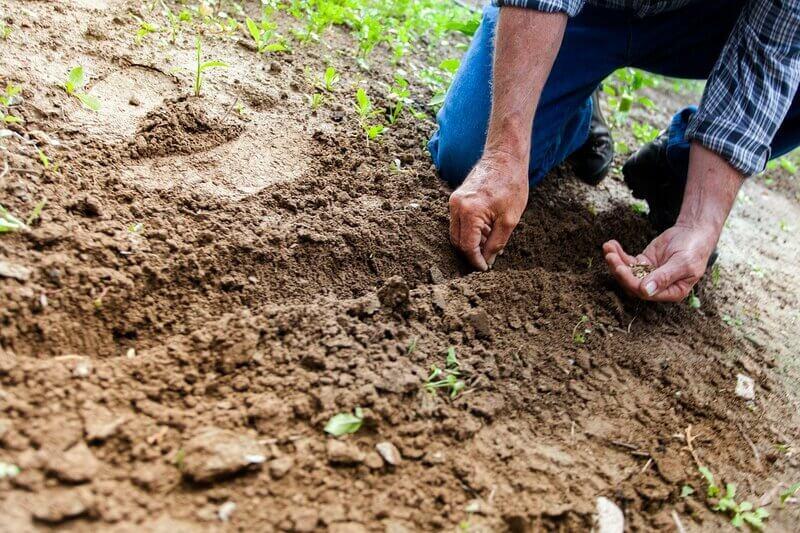 Mãos fazendo cuidado do solo