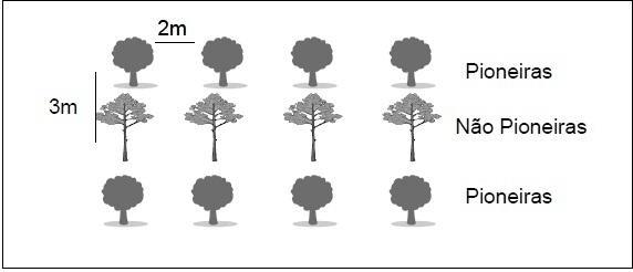 Modelo de plantio em linhas alternadas de espécies pioneiras e não pioneiras