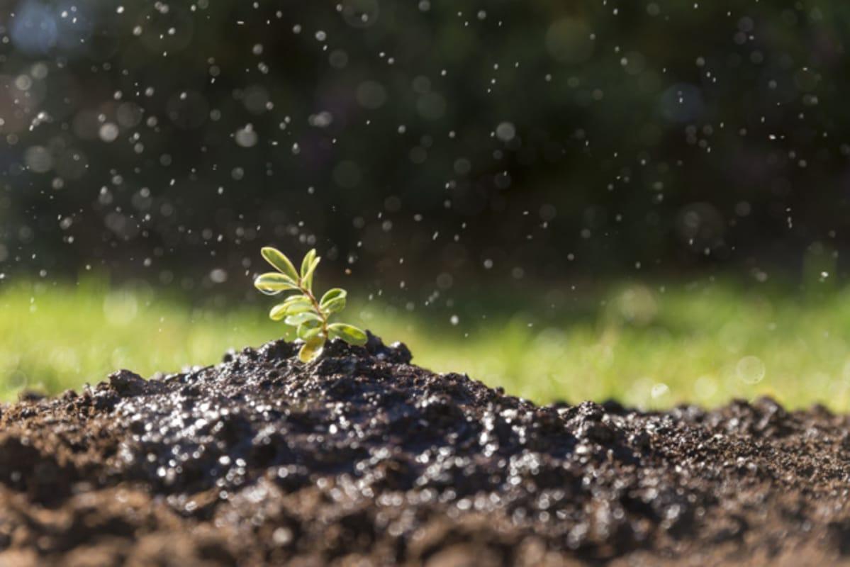 Fertilização do solo: o que é? Qual a importância?