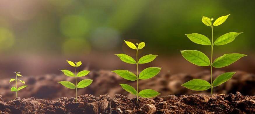Plantas saudáveis em ordem de tamanho