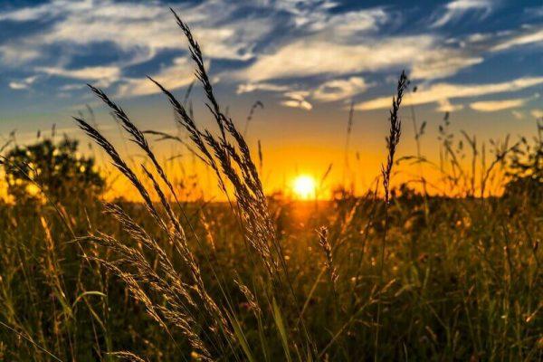 Pôr do sol em lavoura