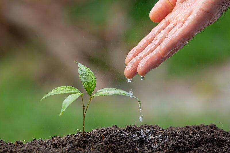 Aprenda como lidar com as pragas no plantio