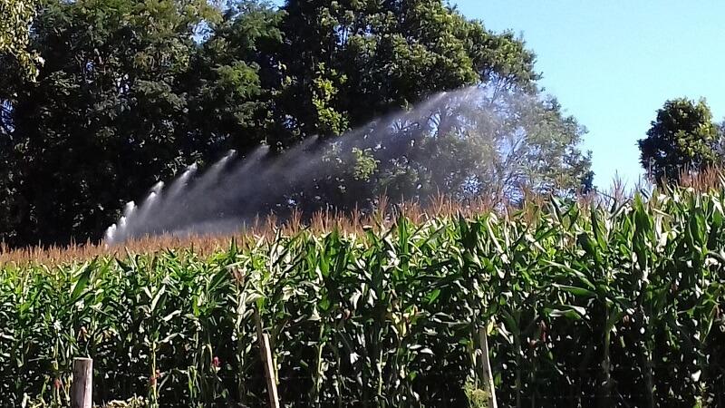 Saiba como a irrigação pode favorecer a produção de milho