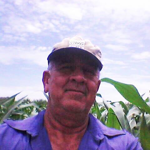 Produtor mineiro triplica produção de milho com irrigação.