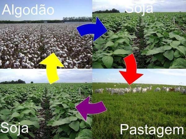 Rotação de culturas em uma mesma propriedade