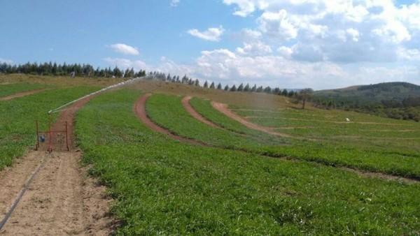 Sistemas de Irrigação de Baixo Custo