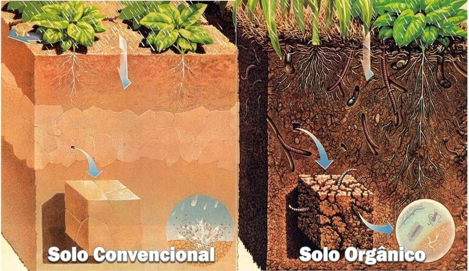 Solo convencional e solo orgânico