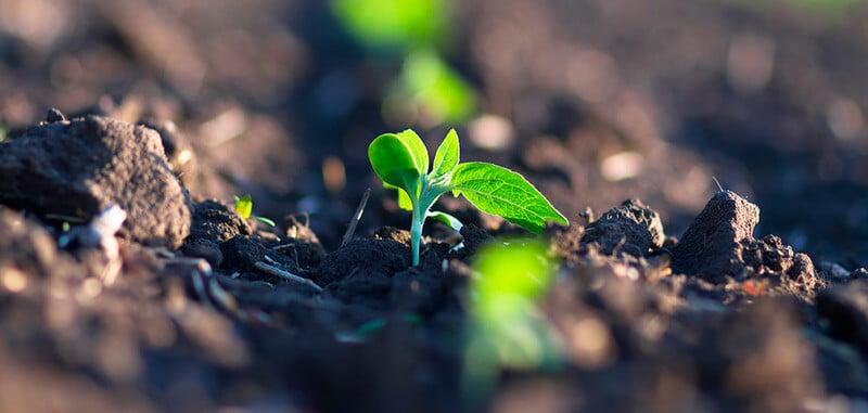 Soluções para degradação do solo