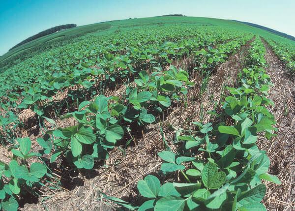 Superfície do solo com plantações