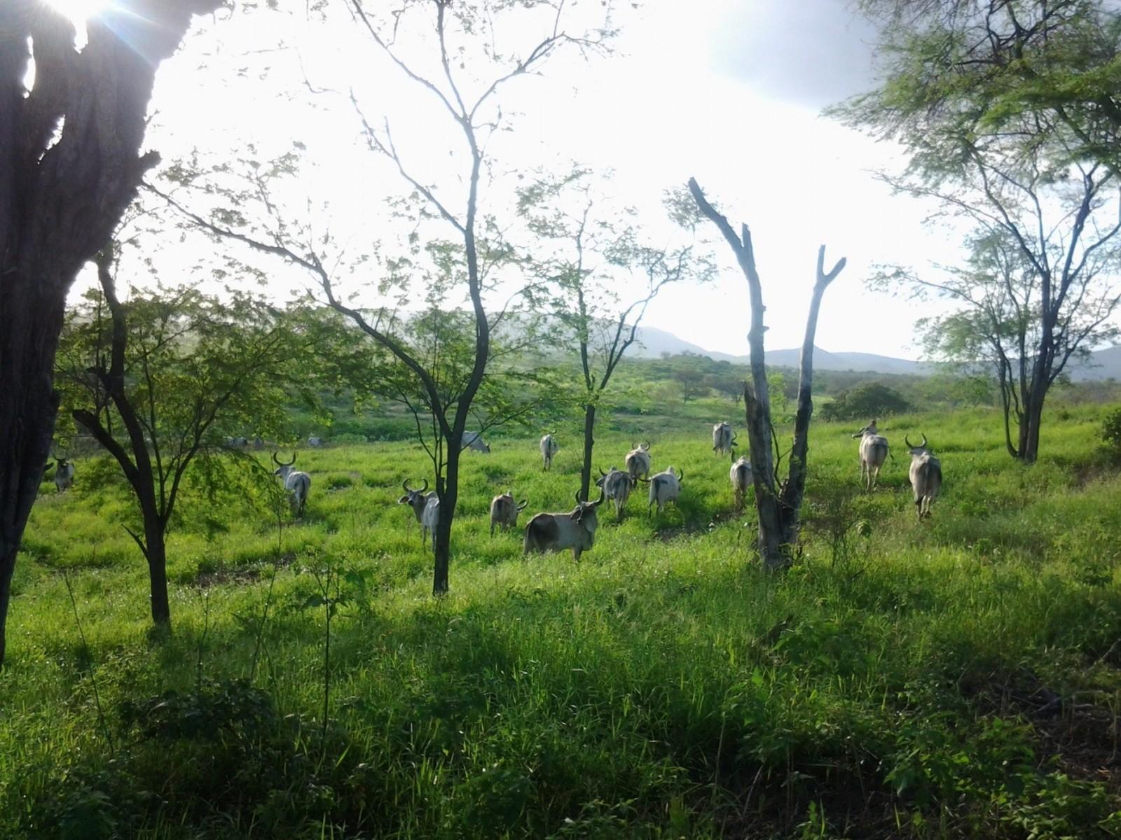 Fazenda TOP 10 em produção de leite no Brasil utiliza o IRRIGAT